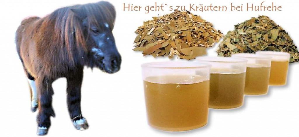 Hufrehe Kräuter