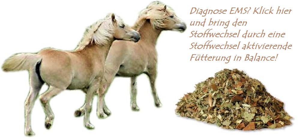 Equines metabolisches Syndrom und Hufrehe