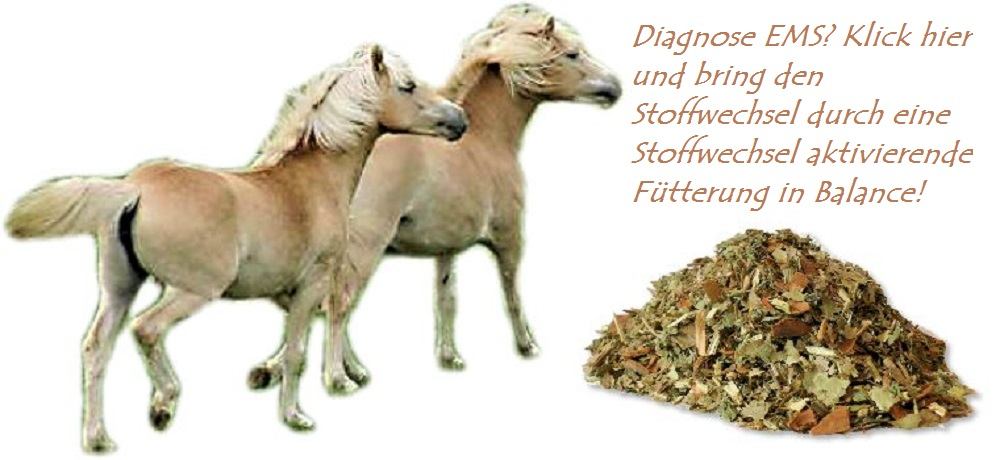 Equines metabolisches Syndrom und Hufrehe