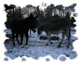 Esel Lilli 2